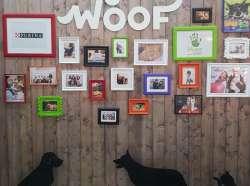 Woof фестиваль о тех кто рядом